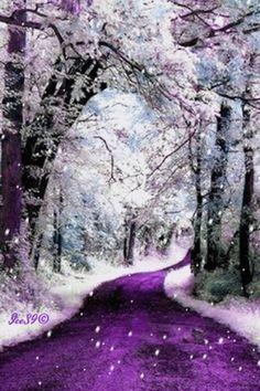 Purple winter dream