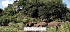 Singita Game Reserves