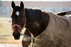 As you prepare for #horseshows, it's important to assess your #horseshealth. A spring health evaluation can ensure your #horse is ready to go.
