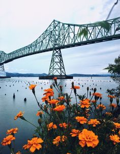 Megler Bridge, Astoria, Oregon — by Rachel Samanyi. One of the coolest sight along Hwy 101 ... you can't miss this bridge when in Astoria-Oregon #StunningStructures...