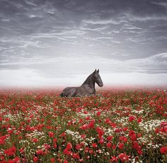"""""""The air of heaven is that which blows between a horse's ears."""" An Arabian proverb. by -Delphine - on Flickr."""
