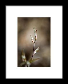 Sienna Brown Framed Print By Christina Rollo
