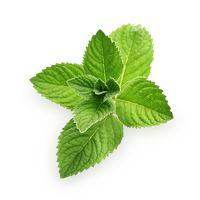 Dna, pakostnice - byliny, bylinky, babské rady, čaj, tinktura, zelenina vhodná při dně