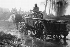 Untold story of the million horses sent to the front line in First World War