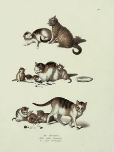 The Antiquarium - Antique Print & Map Gallery - Karl Brodtmann - Domestic cats Hand-colored lithograph