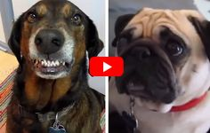These Dogs Were All Asked The Same Questions. Their Reactions Are Priceless