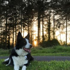 Sunset #dogpictures #dogs #aww #cuteanimals #dogsoftwitter #dog #cute