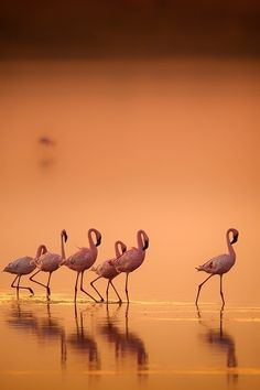 "heaven-ly-mind: "" Flamingo's in gold by Wim van den Heever on 500px """