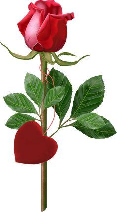Tube fleur rose rouge