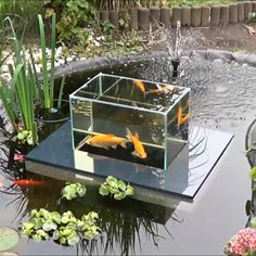 Goldfish swimming above the pond? Nothing koi about it. - http://noveltystreet.com/item/18750/