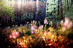 Let's go for a walk...there is magick in the forest.  ~Sapphire Moonbeam~
