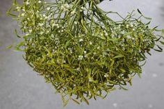 Vascul, eficient in lupta impotriva cancerului Rudolf Steiner, Medicinal Herbs, Cancer, Mai, Europe, Plant