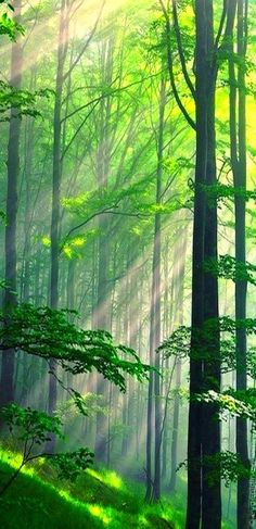 This whole effect is just so calming. Kind of Bambi-ish :)//green-wood.jpg//Nature photography//Outdoors//Scenic//Landscapes//Forests//