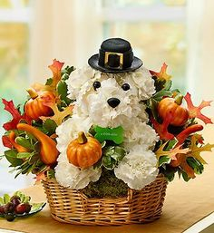 Our A-DOG-ables are getting in the Thanksgiving spirit! Bring smiles to your family and friends with a Thanksgiving A-DOG-able Pilgrim Pooch!  This adorable dog flower arrangement dressed in a pilgrim outfit is all set for Thanksgiving with a pilgrim hat, festive fall leaves, pumpkins, and gourds.