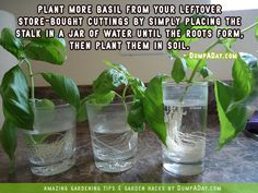 How to Regrow Basil: http://homeandgardenamerica.com/7-awesome-gardening-hacks