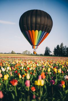 Gal Meets Glam - 2016 April 21 - Thomas Takeover: Quick Trip to Oregon - Wooden Shoe Tulip Festival Cool Pictures, Beautiful Pictures, Beautiful Places, Air Balloon Rides, Hot Air Balloons, Air Ballon, Above The Clouds, Oregon Travel, Places To See
