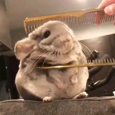 Funny Animals Compilation - Cutest Animals Ever Cute Little Animals, Cute Funny Animals, Cute Cats, Funny Animal Memes, Animal Humor, Animal Quotes, Cute Animal Videos, Cute Creatures, Animals Beautiful