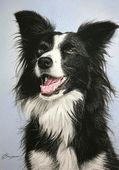 Ten steps to painting realistic eyes for dog portraits in pastels