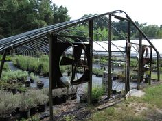 """previous pinner """"Old Greenhouse at herb farm"""" --I think it may be a high tunnel with the poly cover removed for the summer."""