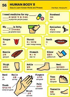 56 Learning Korean - Human Body II