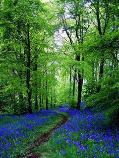 Bluebell Path - Fife, Scotland - echristopher @ flickr - Pixdaus