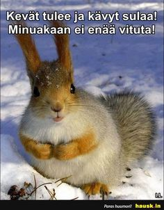 Funny Pick, Wtf Funny, Finland, Funny Pictures, Jokes, Lol, In This Moment, Animals, Humor