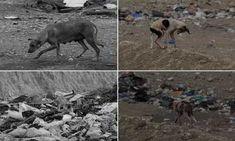 Κορινθία: Εξαθλιωμένα αδέσποτα ζώα στην χωματερή Λουτρακίου ζητούν την βοήθειά μας (φώτο)