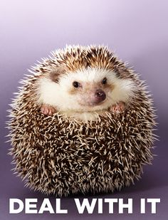 What Animal Were You Born To Be? Hedgehog You're intelligent, quick on your…