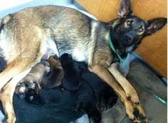 dog abandoned while giving birth