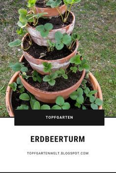 From herb and strawberry towers - a guide!- Building a strawberry tower yourself is not difficult. It also belongs in every pot garden. You can plant strawberries in pots. # strawberry tower # strawberries garden world Strawberry Tower, Strawberry Garden, Garden Care, Garden Planters, Herb Garden, Potted Garden, Yucca, Vintage Garden Decor, Deco Nature