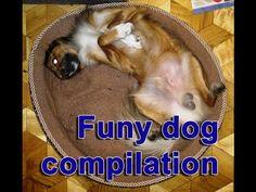 YouTube – funny dog compilation