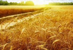 El maná de cada día | El resto cayó en tierra buena: nació, creció y dio grano; y la cosecha fue del treinta o del sesenta o del ciento por uno
