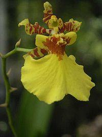 flores colombianas en via de extincion - Buscar con Google