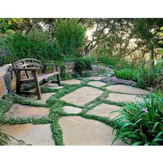 Ground cover flowers - Google Search