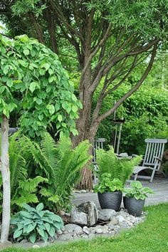 50 + Simple Shade Garden Design-Ideen - Garten - Desings World Tropical Garden Design, Backyard Garden Design, Backyard Landscaping, Landscaping Ideas, Tropical Gardens, Tropical Plants, Backyard Designs, Tropical Landscaping, Small Backyard Gardens