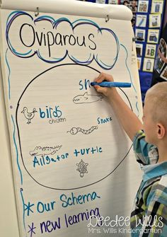 Mrs. Wills Kindergarten: Oviparous Animals Lesson Plans ~ We have always loved learning about oviparous and viviparous animals! I usually cover these lessons around Easter/Spring Break when all these critters are on their minds.