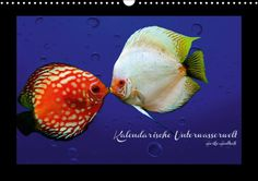 Kalendarische Unterwasserwelt - CALVENDO Kalender von Heike Hultsch