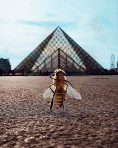 The World's First Bee Influencer Is Trying To Raise Funds To Save Her Species Bee Pictures, Places In Switzerland, Bee Photo, Real Queens, Luxury Pools, Bee Art, Water Me, Save The Bees, Save The Planet
