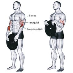 Main muscles worked: Brachioradialis Biceps Brachii and Brachialis. Also known as a weight plate overhand curl. Weight plate reverse curl exercise guide and video - Fitness Shirts - Ideas of Fitness Shirts Forearm Workout, Biceps Workout, Gym Workouts, At Home Workouts, Forearm Training, Abdominal Workout, Squat Workout, Step Fitness, Muscle Fitness