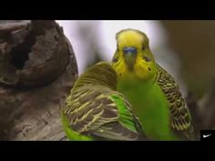 СЕРДЦЕ ЗАМИРАЕТ)) Потрясающая, самая Красивая Музыка для души!!! КРАСИВЫЙ КЛИП. - YouTube Native American Music, Relaxing Music, World Music, Beautiful Birds, Animal Pictures, Youtube, Songs, Film, Parrots