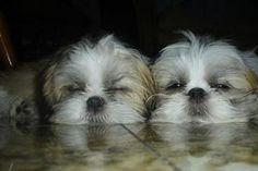 What cuties!