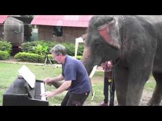The cutest thing in the whole universe.  My heart exploded. Man playing music for elephants - see their adorable reaction.