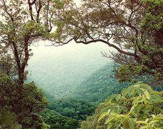 Floresta da Tijuca / Tijuca Forest - Rio de Janeiro