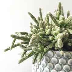 Media Images, Houseplants, Cactus Plants, Indoor Plants, Nature, Babies, Accessories, Inside Plants, Naturaleza