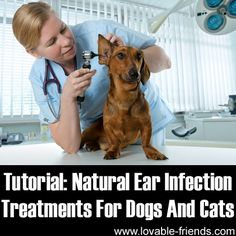 Natural Ear Infection Treatments For Dogs And Cats ►► http://www.lovable-friends.com/natural-ear-infection-treatments-for-dogs-and-cats/?i=p