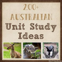 Australia Unit Study Ideas Educational Activities For Toddlers, Science Activities, Learning Resources, Science Fun, School Resources, Australia For Kids, Australia School, Lesson Plan Examples, Lesson Plans