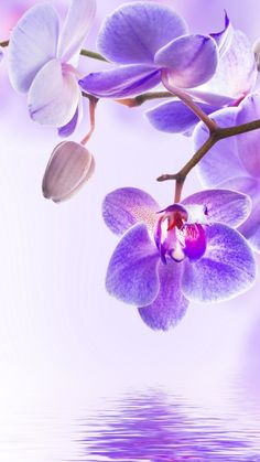 цветок, orchid, flower, 4k (vertical)