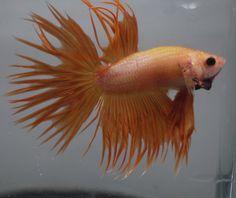 Tropical Live Fish