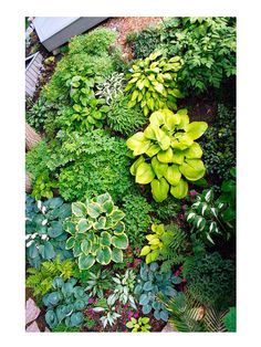 Hostas, bleeding hearts and ferns.    Bottom: Purple Oxalis contrasts yellow Corydalis in both color and texture. Pair oxalis with burgundy tones of Japanese painted fern. Spotted lungwort ties into the silvery fern fronds, and big-leaf Petasites and hostas offers fun contrast with its large leaves.