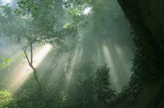 ancient jungle by mistubako, via Flickr